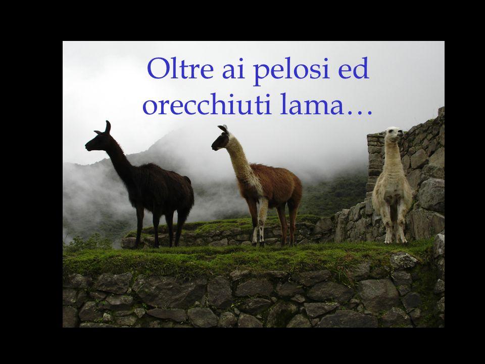 Ma non tutti sanno che… I lama non sono gli unici strani animali del Perù!