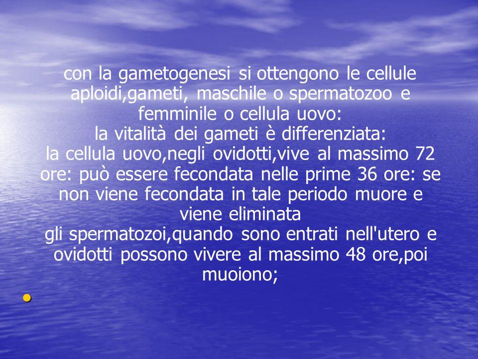 con la gametogenesi si ottengono le cellule aploidi,gameti, maschile o spermatozoo e femminile o cellula uovo: la vitalità dei gameti è differenziata: