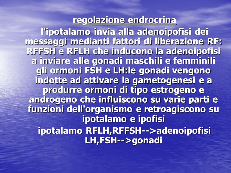 regolazione endrocrina regolazione endrocrina l'ipotalamo invia alla adenoipofisi dei messaggi medianti fattori di liberazione RF: RFFSH e RFLH che in