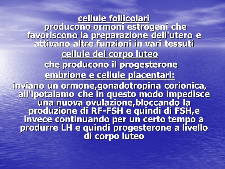 cellule follicolari producono ormoni estrogeni che favoriscono la preparazione dell'utero e attivano altre funzioni in vari tessuti cellule follicolar