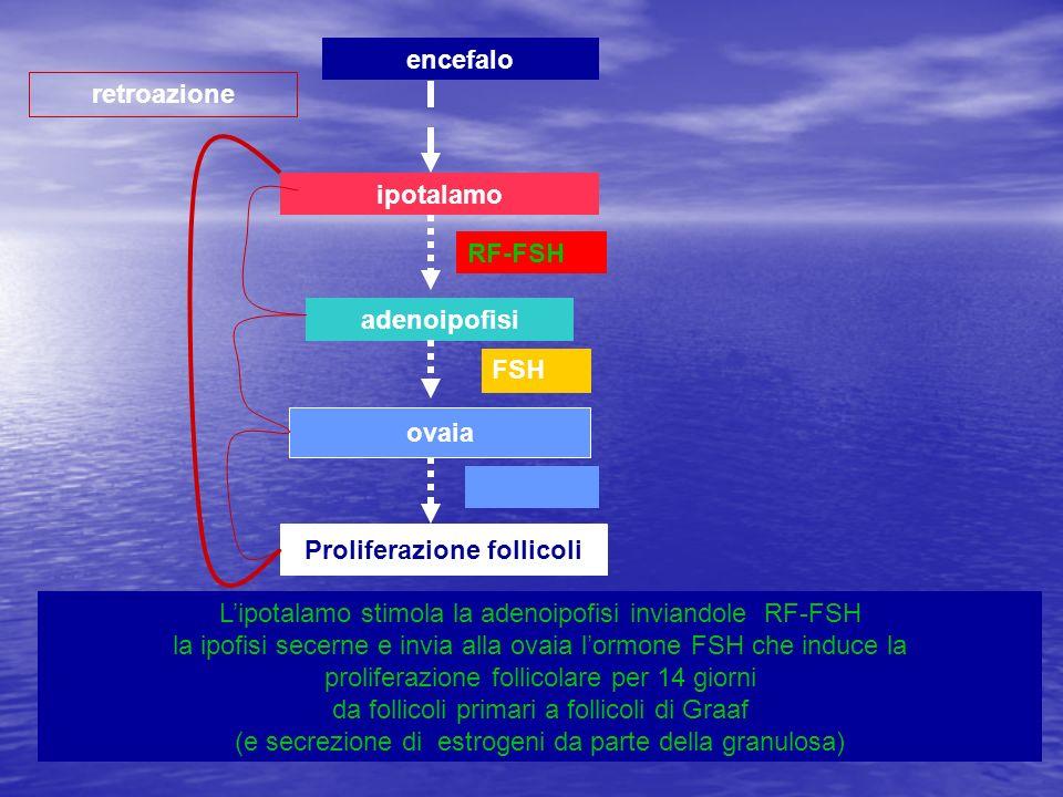 ipotalamo adenoipofisi ovaia Proliferazione follicoli retroazione encefalo Lipotalamo stimola la adenoipofisi inviandole RF-FSH la ipofisi secerne e i