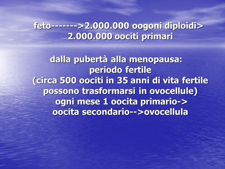 feto------->2.000.000 oogoni diploidi> 2.000.000 oociti primari feto------->2.000.000 oogoni diploidi> 2.000.000 oociti primari dalla pubertà alla men
