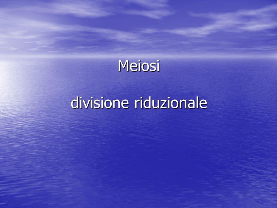 Meiosi divisione riduzionale