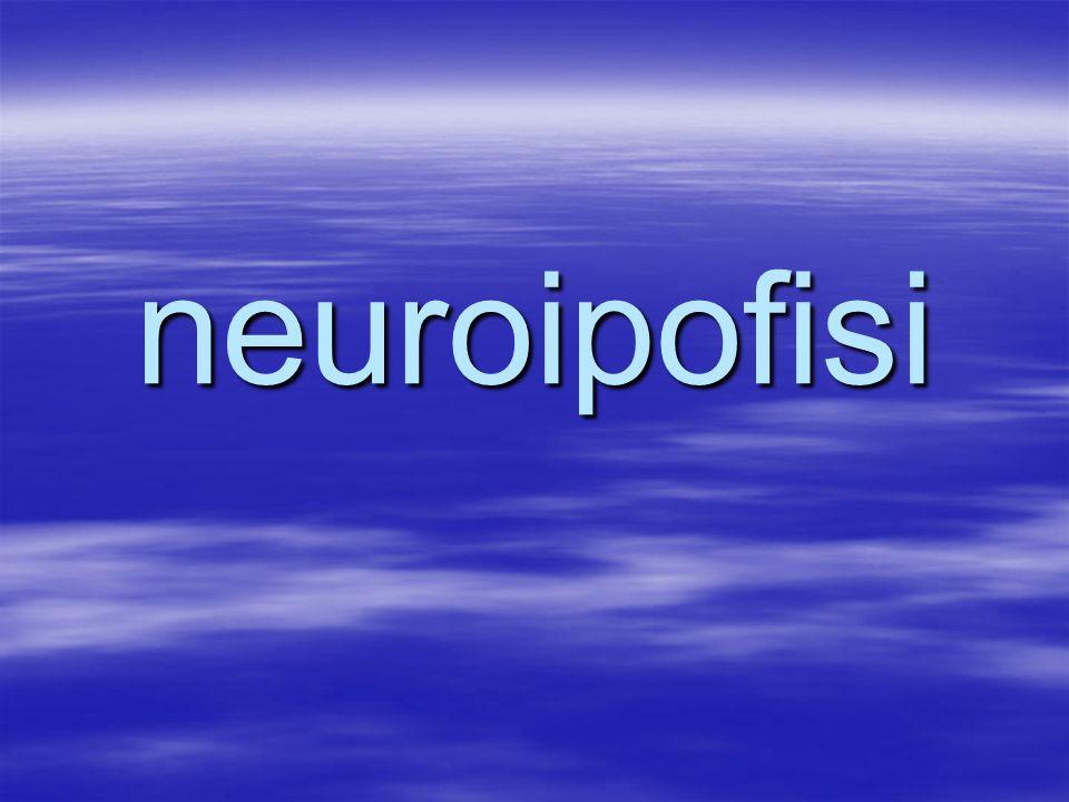 neuroipofisi