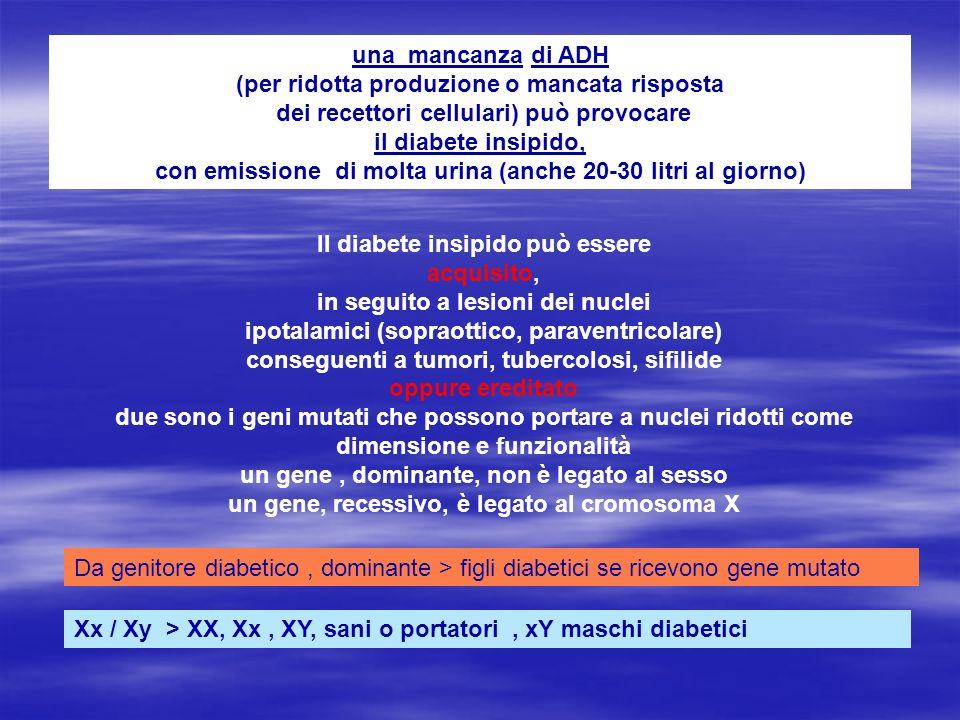 una mancanza di ADH (per ridotta produzione o mancata risposta dei recettori cellulari) può provocare il diabete insipido, con emissione di molta urin