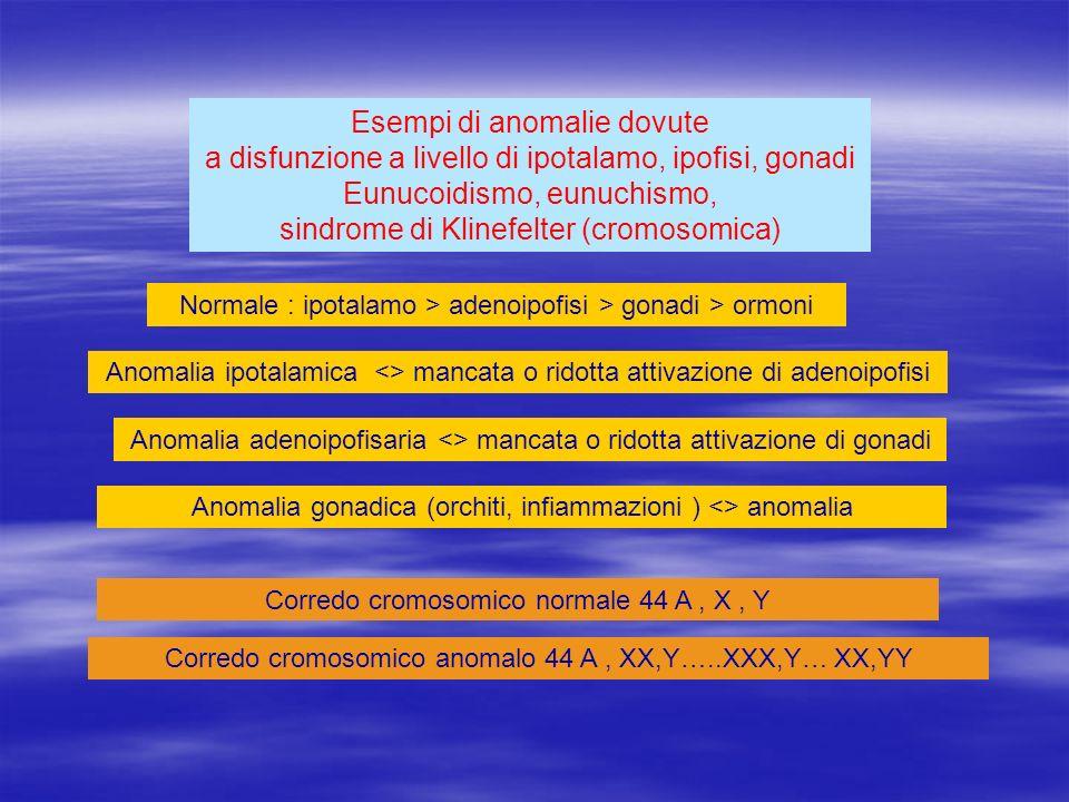 Esempi di anomalie dovute a disfunzione a livello di ipotalamo, ipofisi, gonadi Eunucoidismo, eunuchismo, sindrome di Klinefelter (cromosomica) Normal