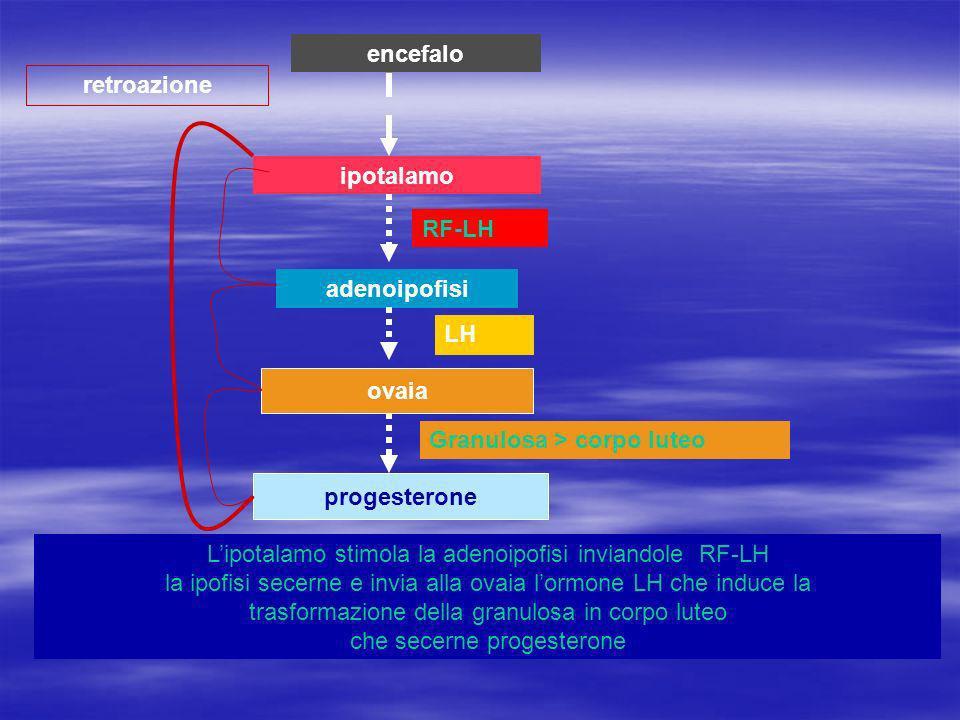 ipotalamo adenoipofisi ovaia progesterone retroazione encefalo Lipotalamo stimola la adenoipofisi inviandole RF-LH la ipofisi secerne e invia alla ovaia lormone LH che induce la trasformazione della granulosa in corpo luteo che secerne progesterone RF-LH LH Granulosa > corpo luteo