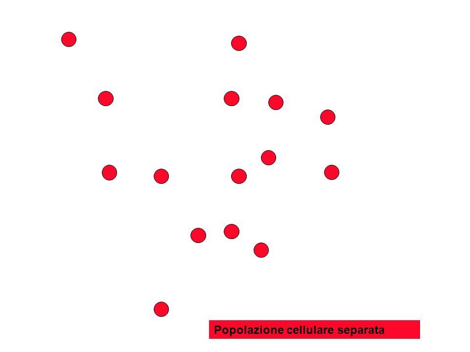 Popolazione cellulare separata
