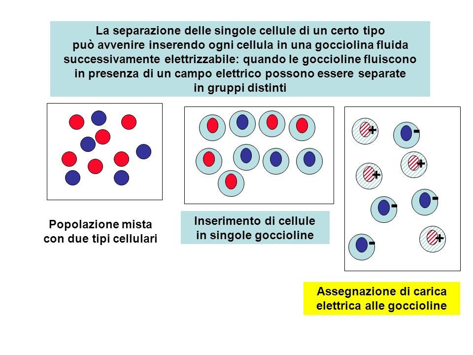 quando le goccioline fluiscono in presenza di un campo elettrico possono essere separate in gruppi distinti + + + + - - - - + -