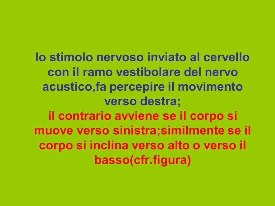 lo stimolo nervoso inviato al cervello con il ramo vestibolare del nervo acustico,fa percepire il movimento verso destra; il contrario avviene se il c