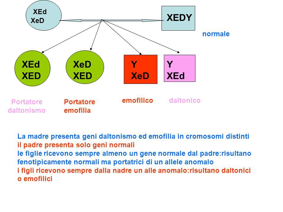 XEDY Y XeD normale daltonico Portatore daltonismo XEd XED XeD XED Y XEd emofilico Portatore emofilia XEd XeD La madre presenta geni daltonismo ed emof