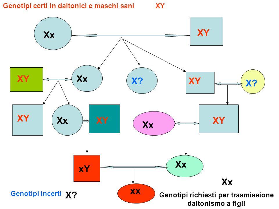 XY Xx xx X? xY Xx Genotipi certi in daltonici e maschi sani Genotipi richiesti per trasmissione daltonismo a figli XY Xx X? Genotipi incerti