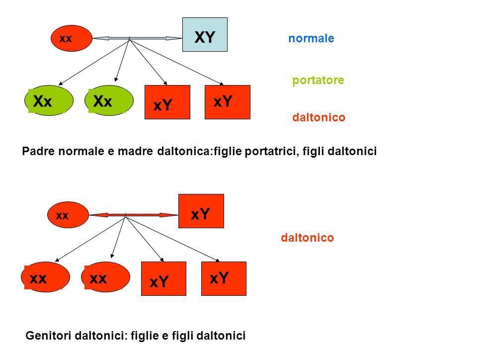xx XY Xx xY normale daltonico portatore xx xY xx xY daltonico Padre normale e madre daltonica:figlie portatrici, figli daltonici Genitori daltonici: f