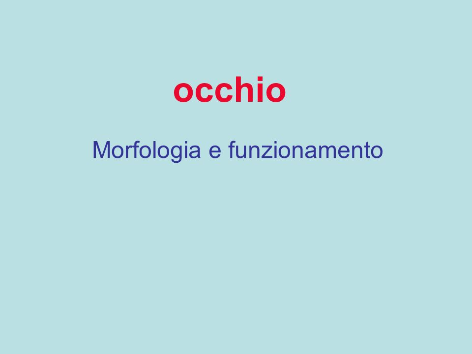 occhio Morfologia e funzionamento
