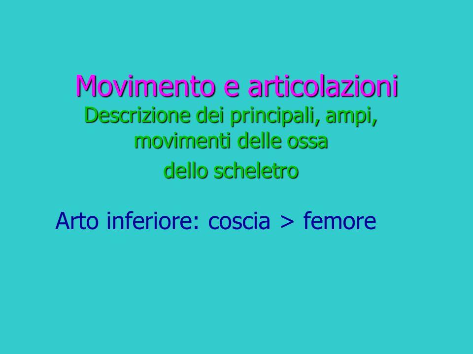 Movimento e articolazioni Descrizione dei principali, ampi, movimenti delle ossa dello scheletro Arto inferiore: coscia > femore