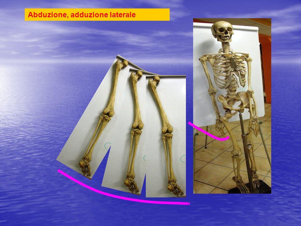 Larto viene allontanato e riavvicinato lateralmente da corpo