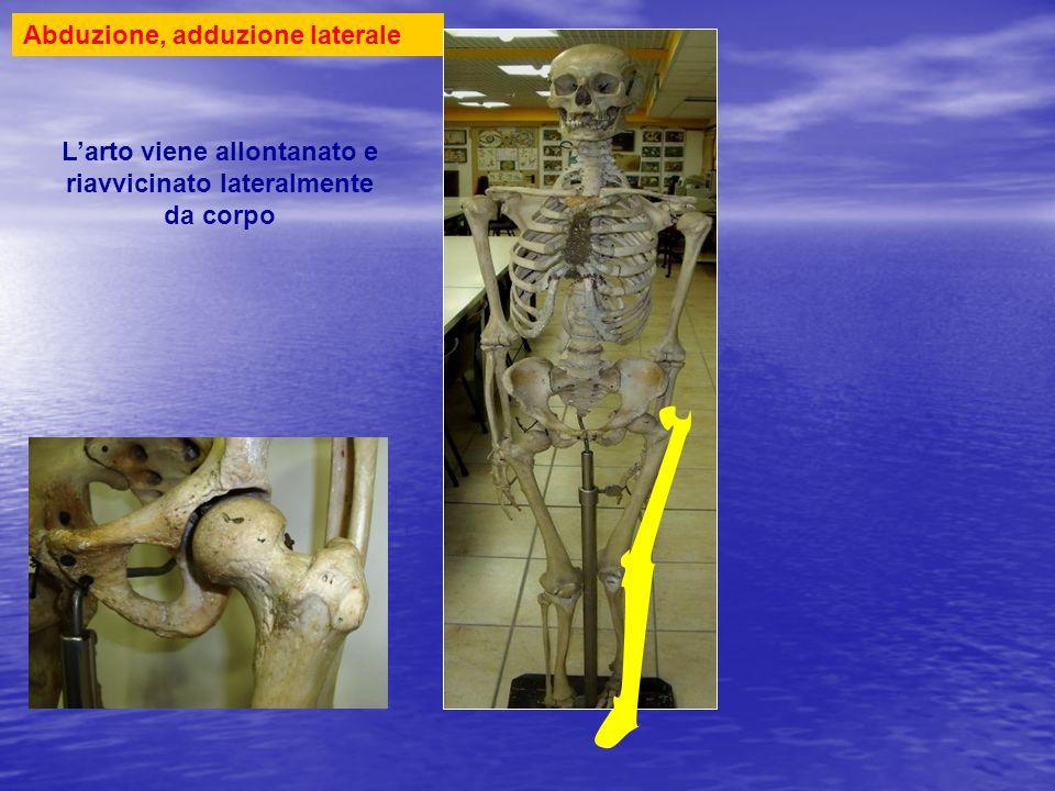 Spostamento arto inferiore pendolare con abduzione, adduzione avanti, indietro enartrosi Testa femore Acetabolo iliaco Pendolare laterale