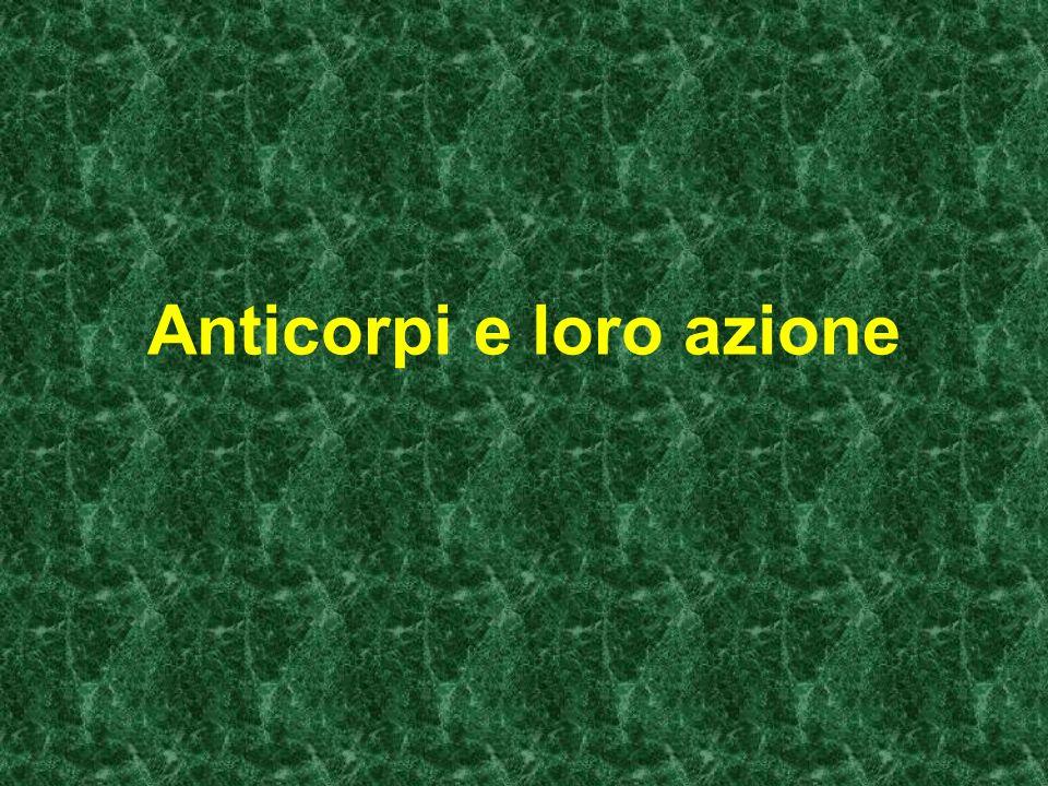 I tipi di anticorpi sono 5 e le loro funzioni variano in rapporto alla loro struttura e composizione: IgM....attivano sistema complemento e macrofagi IgG....attivano sistema complemento e macrofagi IgE....liberano istamina,connesse all allergia IgA....partecipano alla difesa generica IgD....con funzione poco nota