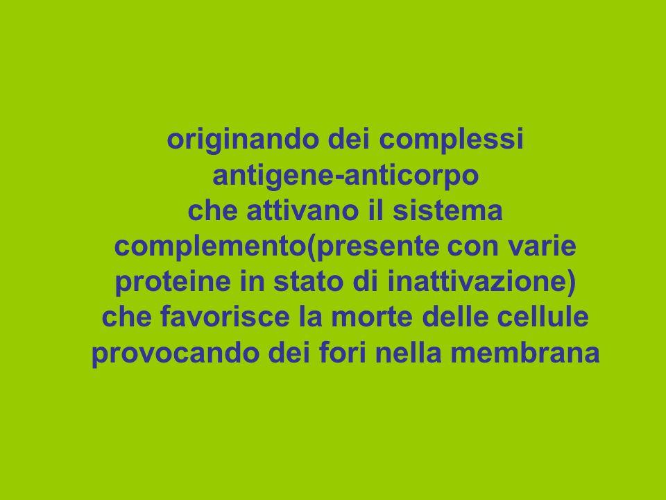 originando dei complessi antigene-anticorpo che attivano il sistema complemento(presente con varie proteine in stato di inattivazione) che favorisce l