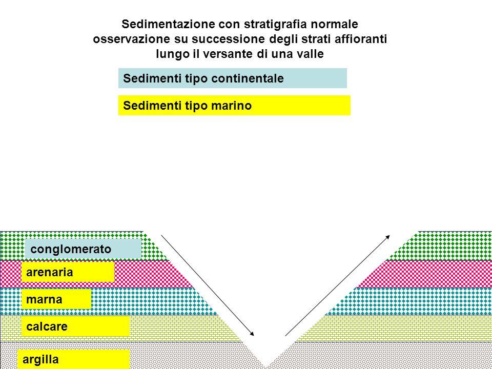 argilla calcare marna arenaria conglomerato Sedimenti tipo continentale Sedimenti tipo marino Sedimentazione con stratigrafia normale osservazione su