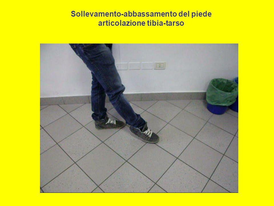 Sollevamento-abbassamento del piede articolazione tibia-tarso