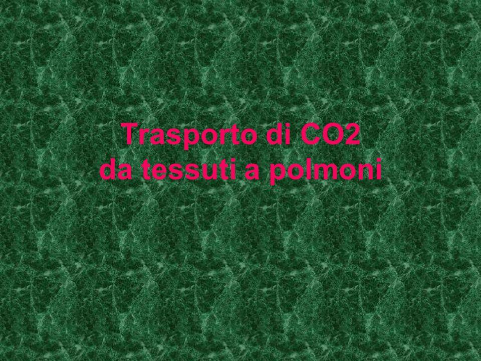 HCO3- ---->entra negli eritrociti e favorisce distacco di H+ da HbH+ HCO3- + H+ --anidrasi carbonica -- >H2CO3 --->H2O + CO2 CO2 passa nel plasma e diffonde negli alveoli