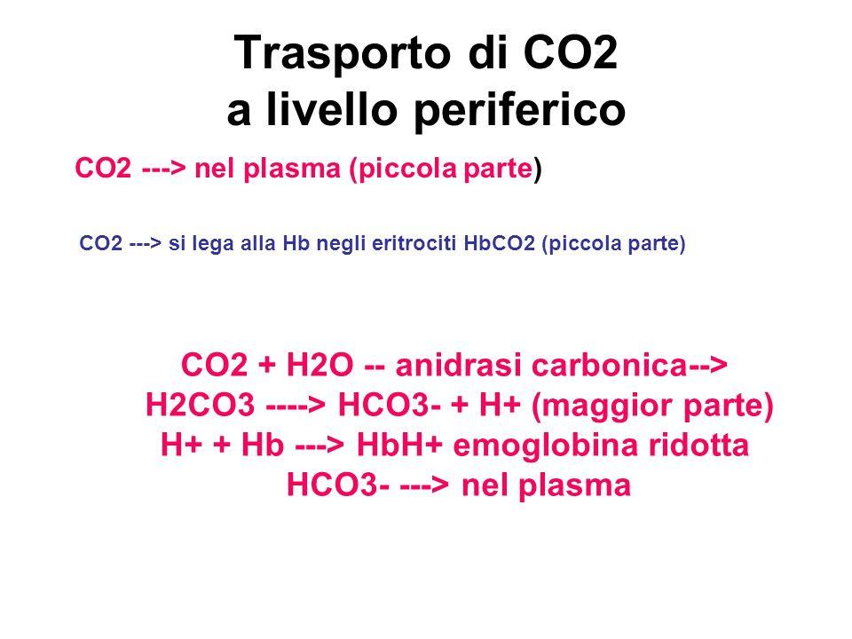 Trasporto di CO2 a livello periferico CO2 ---> nel plasma (piccola parte) CO2 ---> si lega alla Hb negli eritrociti HbCO2 (piccola parte) CO2 + H2O --
