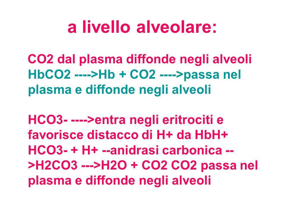 a livello alveolare: CO2 dal plasma diffonde negli alveoli HbCO2 ---->Hb + CO2 ---->passa nel plasma e diffonde negli alveoli HCO3- ---->entra negli e