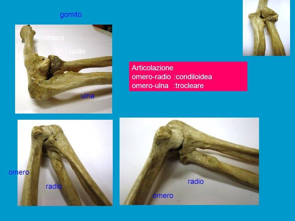 Articolazione del gomito: avambraccio rispetto braccio( radio-ulna > omero) Arto a riposo, verticale > flessione doppia avambraccio