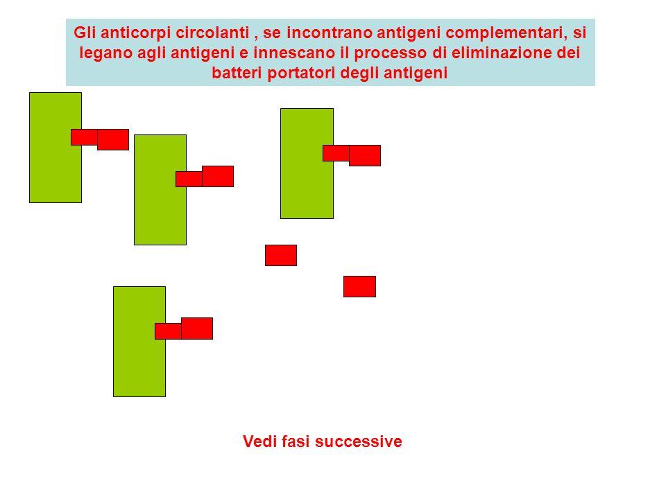 Gli anticorpi circolanti, se incontrano antigeni complementari, si legano agli antigeni e innescano il processo di eliminazione dei batteri portatori