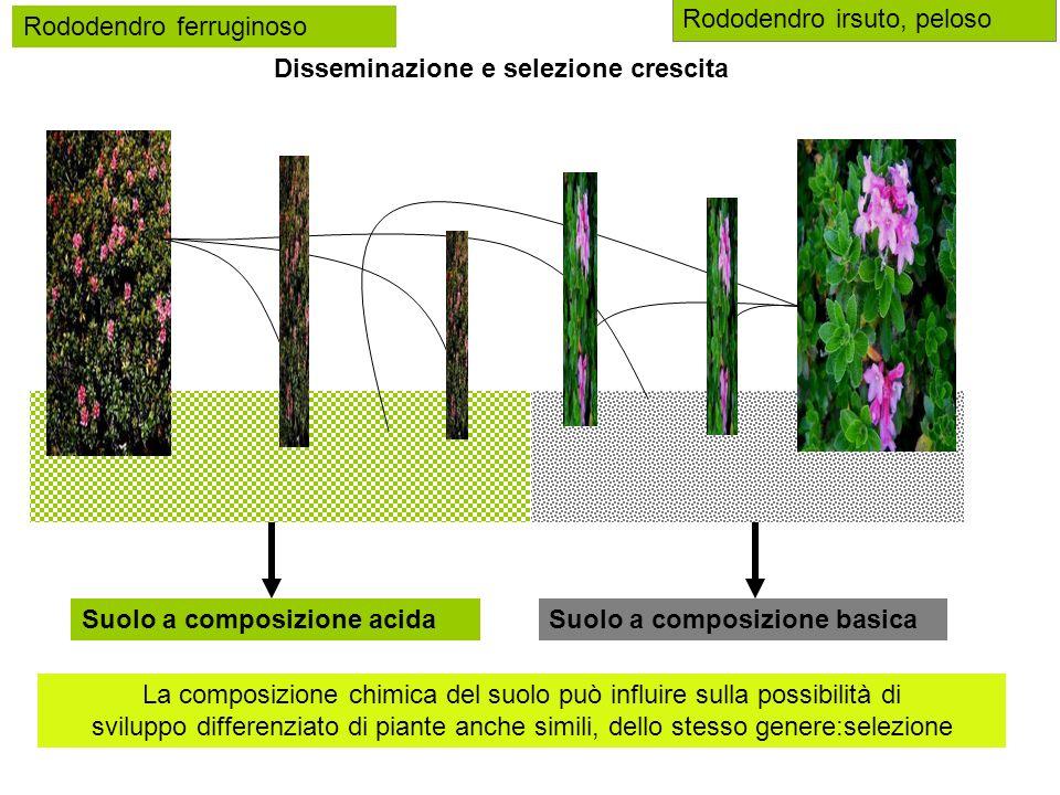 stagno salmastro, salinoprato neutro, poco sale La composizione chimica del suolo può influire sulla possibilità di sviluppo differenziato di piante:selezione alghe margherite