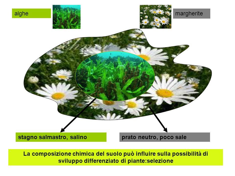 stagno salmastro, salinoprato neutro, poco sale La composizione chimica del suolo può influire sulla possibilità di sviluppo differenziato di piante:s