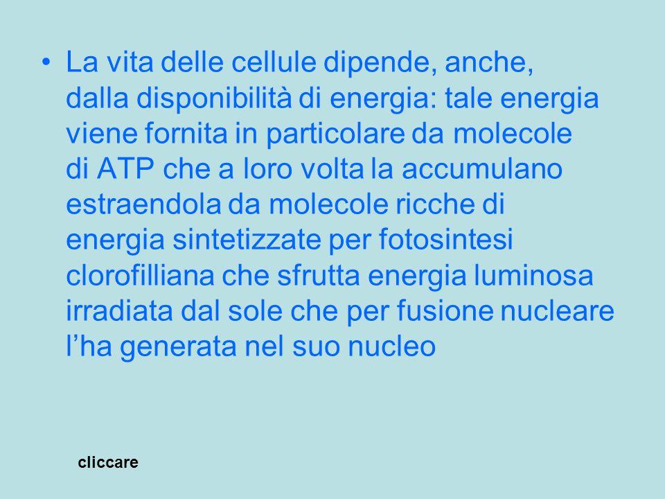 Energia e vita Sole:irradia energia (luce) generata da reazioni di fusione di idrogeno in elio nella parte più interna:nucleo Piante con clorofilla:producono molecole che accumulano energia in composti sintetizzati usando energia luminosa (glucosio) cliccare