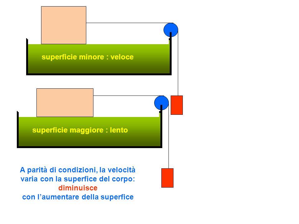 superficie minore : veloce superficie maggiore : lento A parità di condizioni, la velocità varia con la superfice del corpo: diminuisce con laumentare