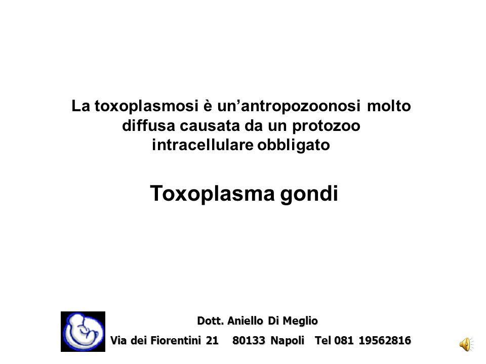 Toxoplasma Dott. Carmine Sica Dott. Aniello Di Meglio Dott. Aniello Di Meglio Via dei Fiorentini 21 80133 Napoli Tel 081 19562816