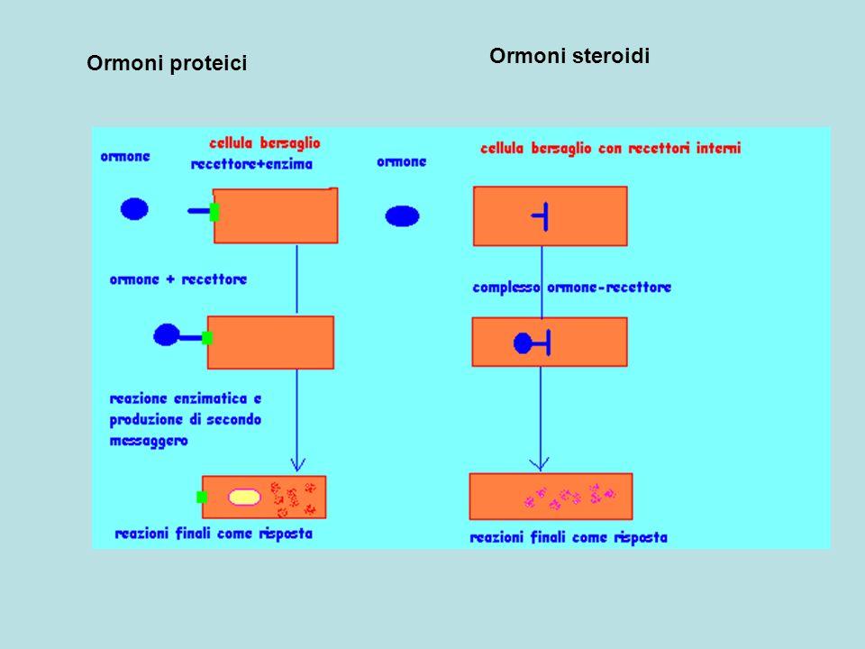 Ormoni proteici Ormoni steroidi