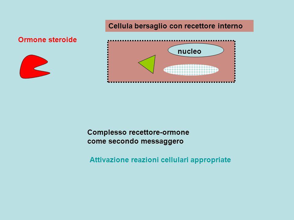 nucleo Cellula bersaglio con recettore interno Ormone steroide Complesso recettore-ormone come secondo messaggero Attivazione reazioni cellulari appro