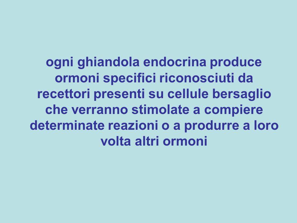 ogni ghiandola endocrina produce ormoni specifici riconosciuti da recettori presenti su cellule bersaglio che verranno stimolate a compiere determinat