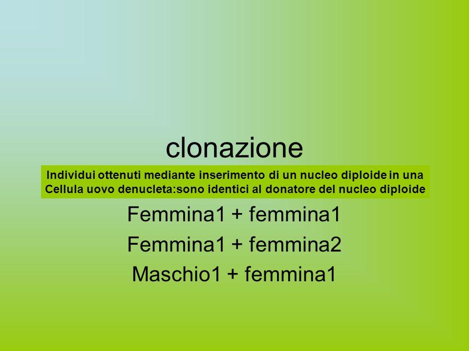 clonazione Femmina1 + femmina1 Femmina1 + femmina2 Maschio1 + femmina1 Individui ottenuti mediante inserimento di un nucleo diploide in una Cellula uovo denucleta:sono identici al donatore del nucleo diploide