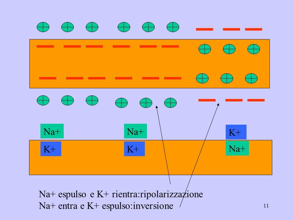 11 Na+ K+ Na+ K+ Na+ espulso e K+ rientra:ripolarizzazione Na+ entra e K+ espulso:inversione