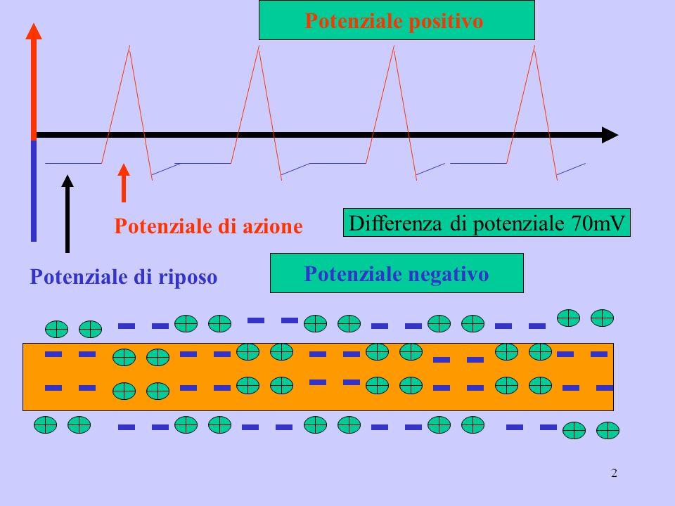 2 Potenziale di riposo Potenziale di azione Potenziale positivo Potenziale negativo Differenza di potenziale 70mV