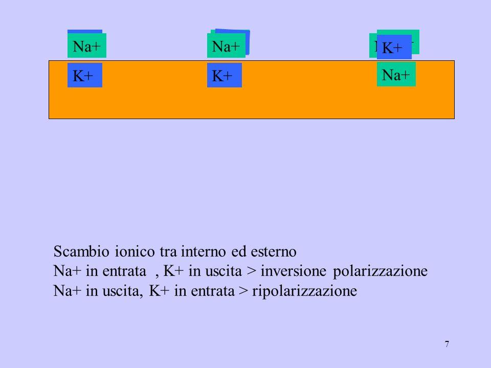 7 Na+ K+ Na+ K+ Na+ K+Na+ K+ Na+ K+Na+ K+ Na+ K+ Na+ K+ Scambio ionico tra interno ed esterno Na+ in entrata, K+ in uscita > inversione polarizzazione Na+ in uscita, K+ in entrata > ripolarizzazione
