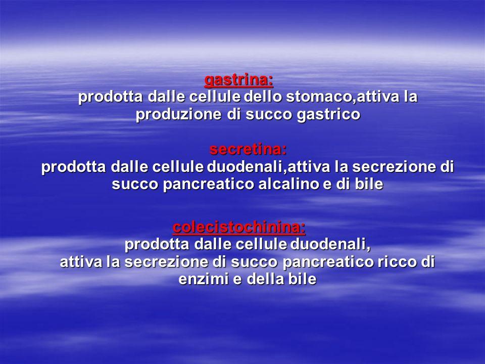 gastrina: prodotta dalle cellule dello stomaco,attiva la produzione di succo gastrico secretina: prodotta dalle cellule duodenali,attiva la secrezione