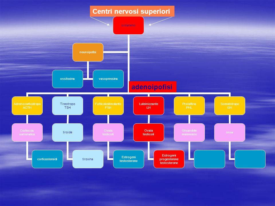 adenoipofisi Centri nervosi superiori
