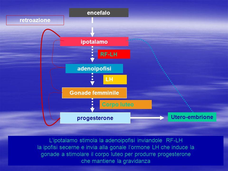 ipotalamo adenoipofisi Gonade femminile progesterone retroazione encefalo Lipotalamo stimola la adenoipofisi inviandole RF-LH la ipofisi secerne e inv