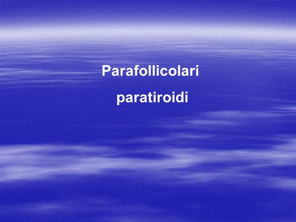 cellule parafollicolari: circondano i follicoli tiroidei producono l ormone calcitonina, che in antagonismo con il paratormone regola il metabolismo del calcio e fosforo cellule parafollicolari: circondano i follicoli tiroidei producono l ormone calcitonina, che in antagonismo con il paratormone regola il metabolismo del calcio e fosforo (con azione ipocalcemizzante) ghiandole paratiroidee: due superiori e due inferiori lato posteriore della tiroide capsula connettivale con cordoni intrecciati, molto vascolarizzati producono un ormone,paratormone,che in antagonismo con la calcitonina,regola il metabolismo del calcio e fosforo (con azione ipercalcemizzante) Paratiroidi superiori paratiroidi inferiori Lobi della tiroide: faccia posteriore