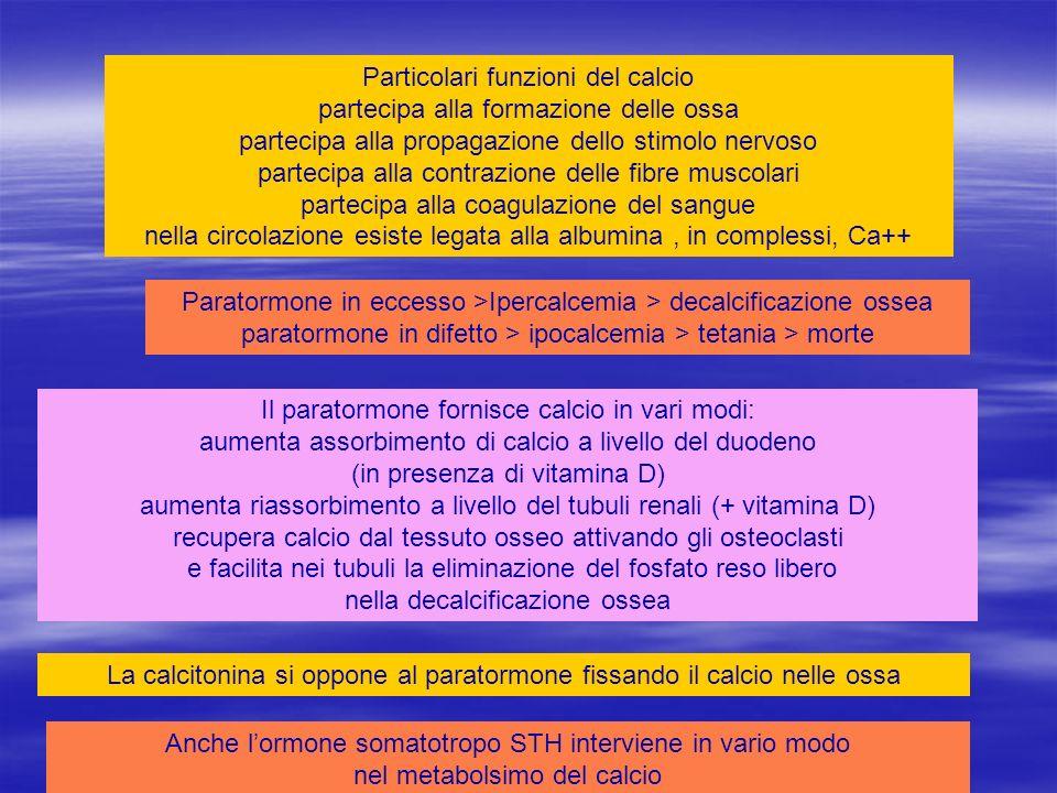 Il paratormone fornisce calcio in vari modi: aumenta assorbimento di calcio a livello del duodeno (in presenza di vitamina D) aumenta riassorbimento a livello del tubuli renali (+ vitamina D) recupera calcio dal tessuto osseo attivando gli osteoclasti e facilita nei tubuli la eliminazione del fosfato reso libero nella decalcificazione ossea + vitamina Dfosforo calcio