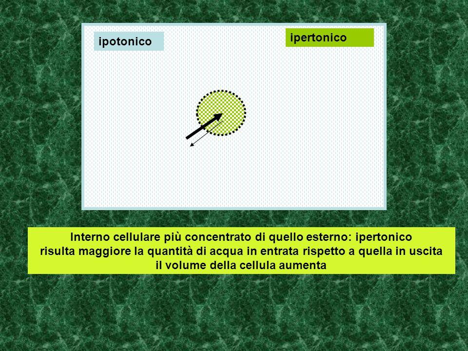 Interno cellulare più concentrato di quello esterno: ipertonico risulta maggiore la quantità di acqua in entrata rispetto a quella in uscita il volume