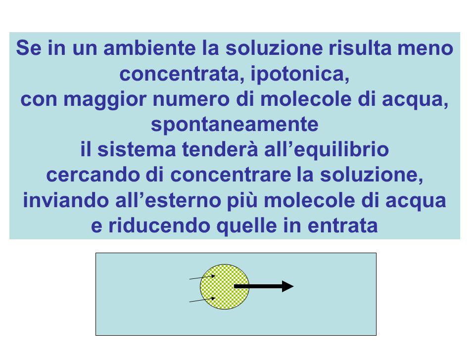 Se in un ambiente la soluzione risulta meno concentrata, ipotonica, con maggior numero di molecole di acqua, spontaneamente il sistema tenderà allequi