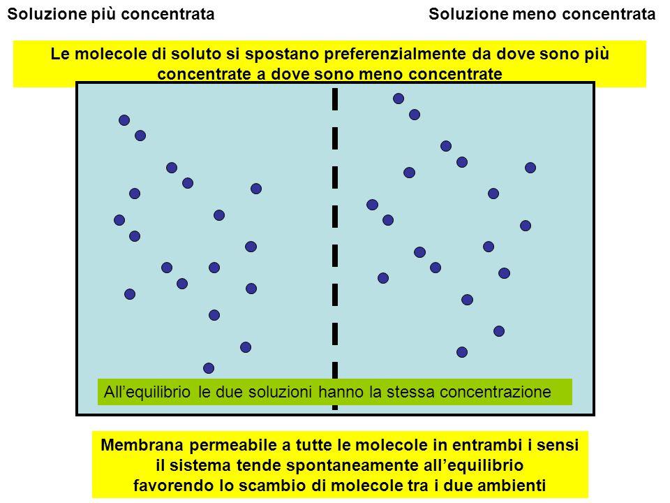 Membrana permeabile a tutte le molecole in entrambi i sensi il sistema tende spontaneamente allequilibrio favorendo lo scambio di molecole tra i due a